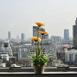 flower near window office building